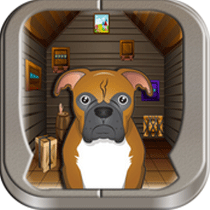 557 Boxer Dog Escape