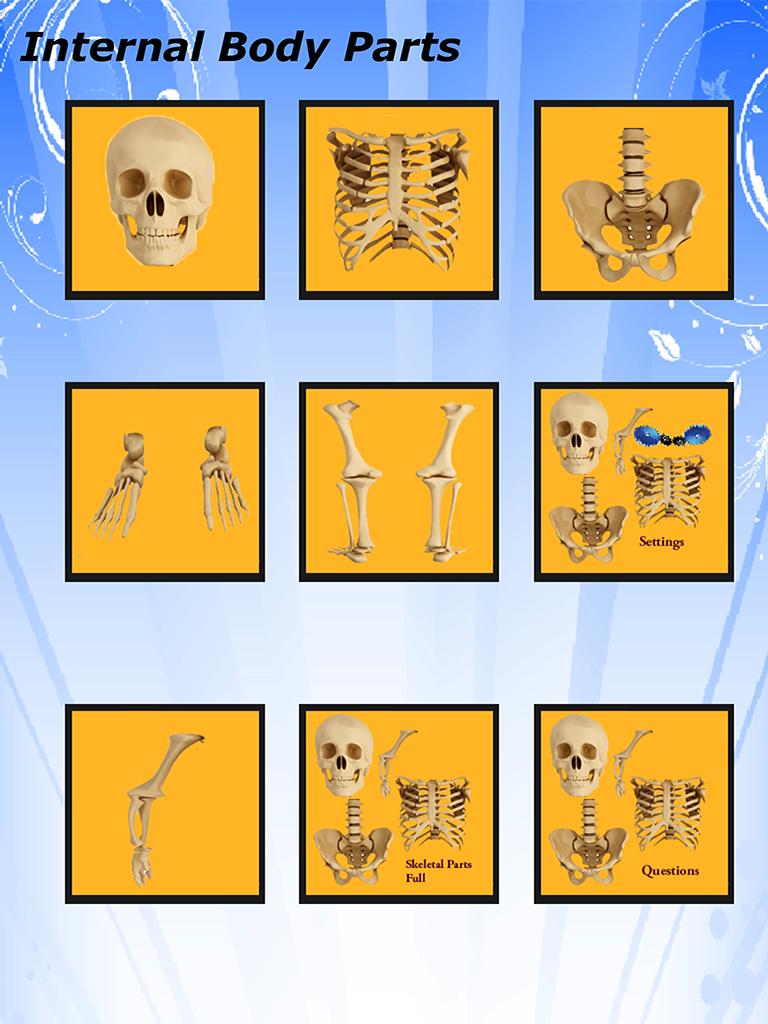 Body Parts – Internal