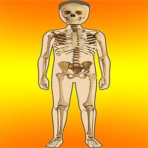 Body Parts – Internal and External