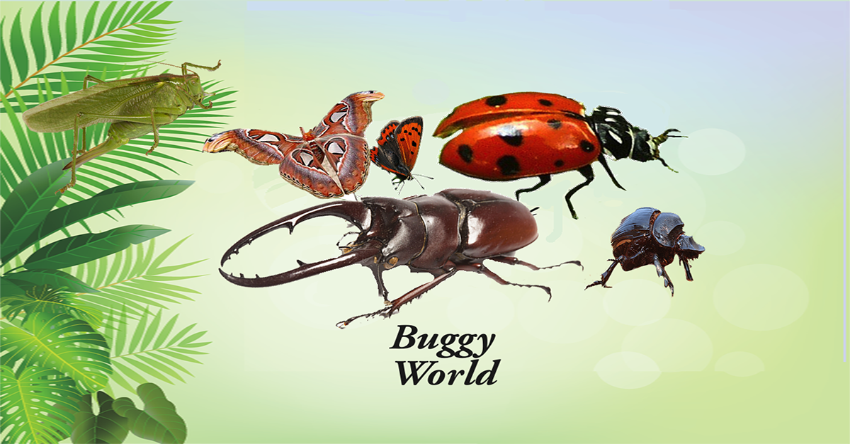 Buggy World
