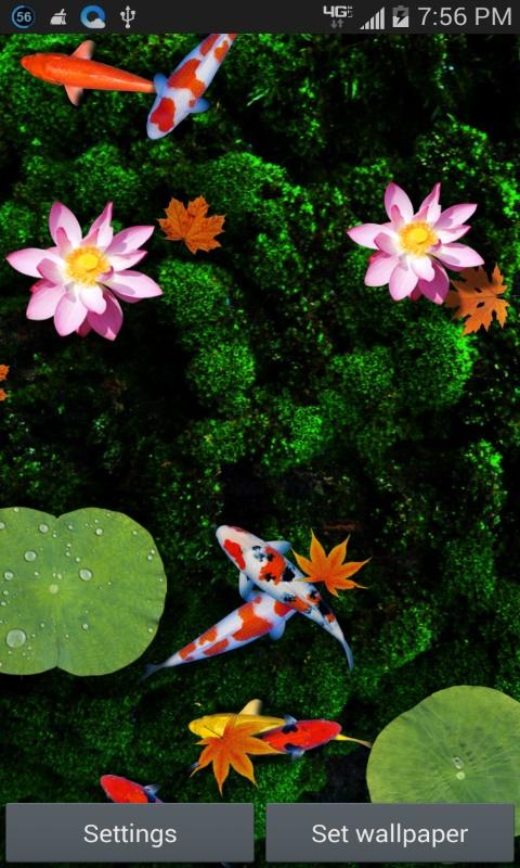Dream Fish Pond