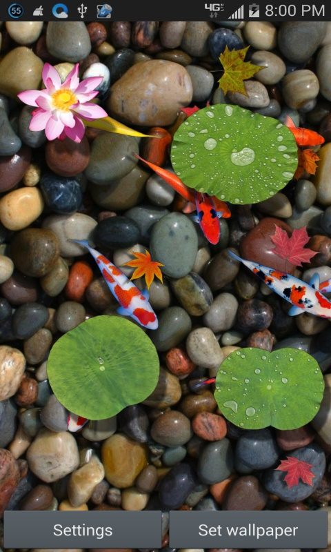 Dream Fish Pond