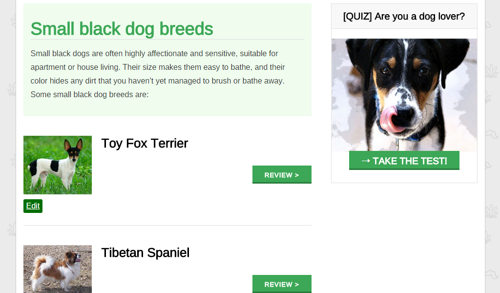 Small Dog Breeds 101