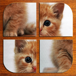 Swipe Puzzle: Fluffy Animals