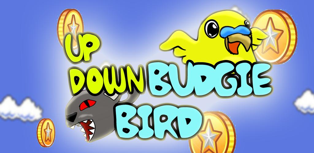 Up Down Budgie Bird