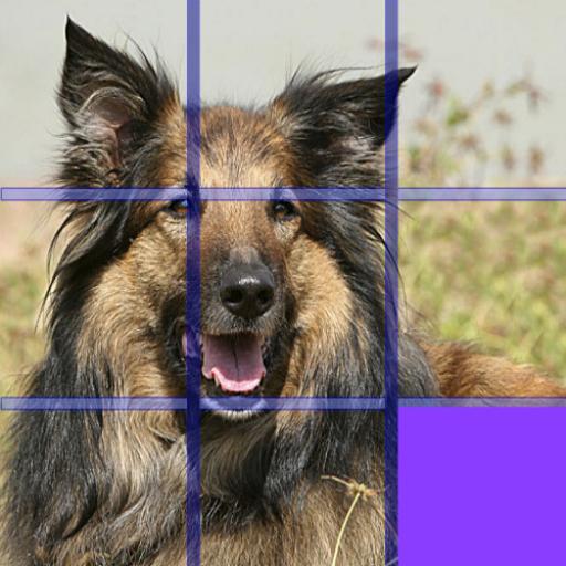 Dog Puzzle 2016