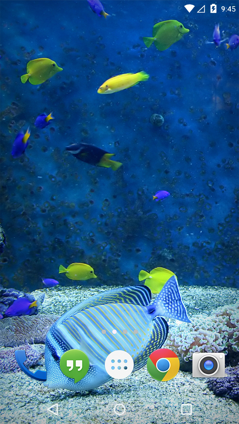 Aquarium Corals Fish Live WP