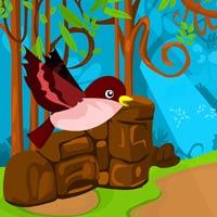 robin bird escape
