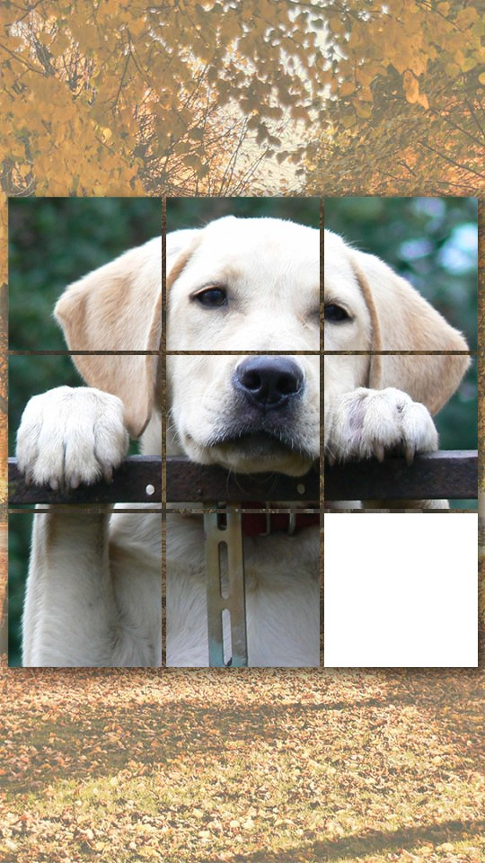 Cute doggy gamesdog puzzles matching pairs dog pictures