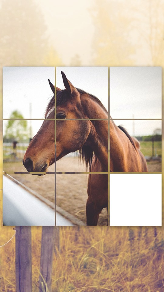 Horse Puzzles Collection
