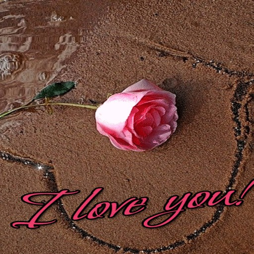 Lovely Pink Rose LWP