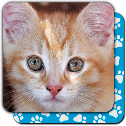 Memory Games free: Cute Cats