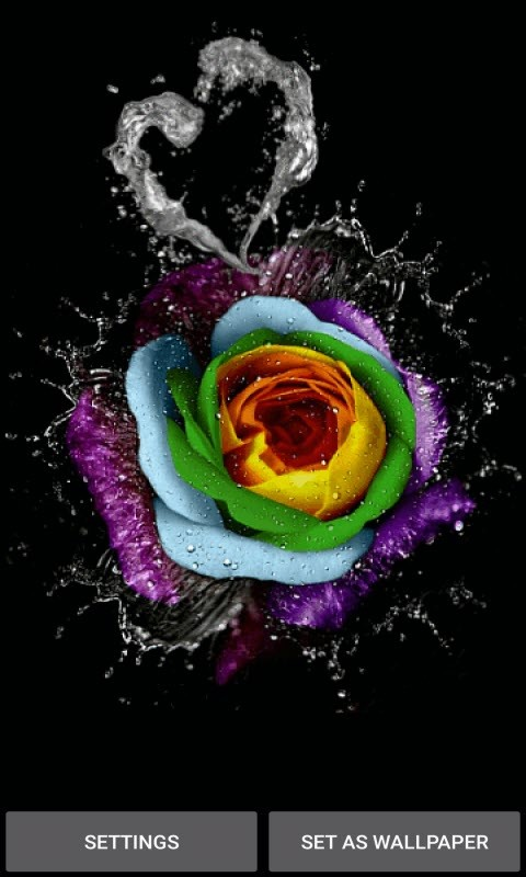 Multicolor Water Rose LWP