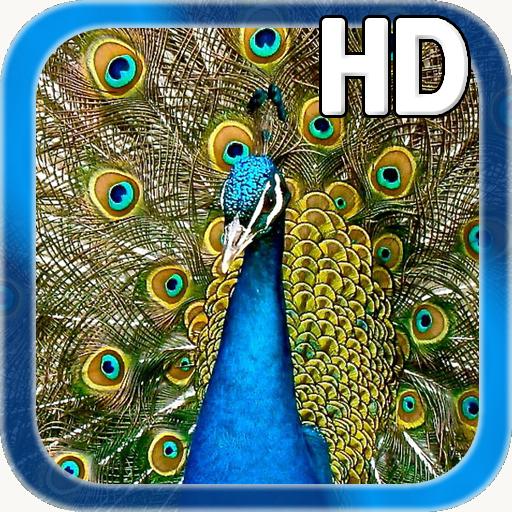 Birds Peacock LWP
