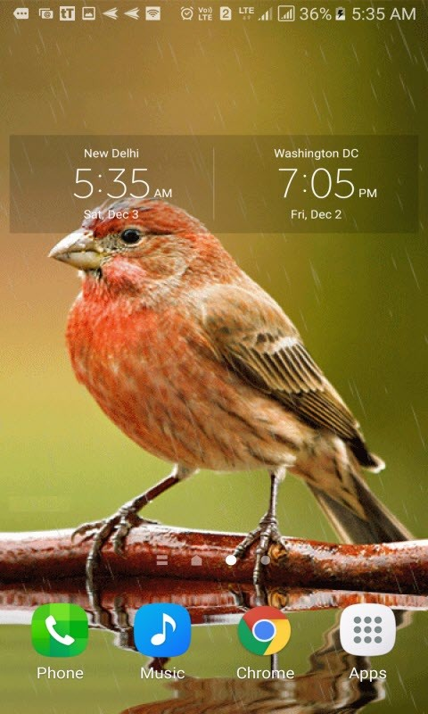 Cute Rainy Bird LWP