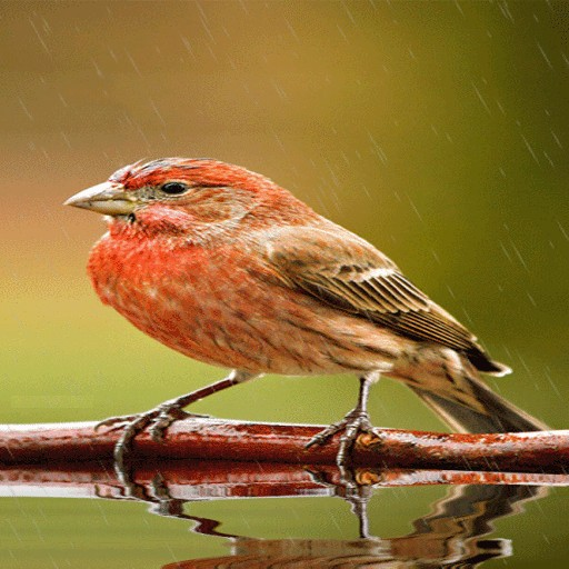 Cute Rainy Bird LWP