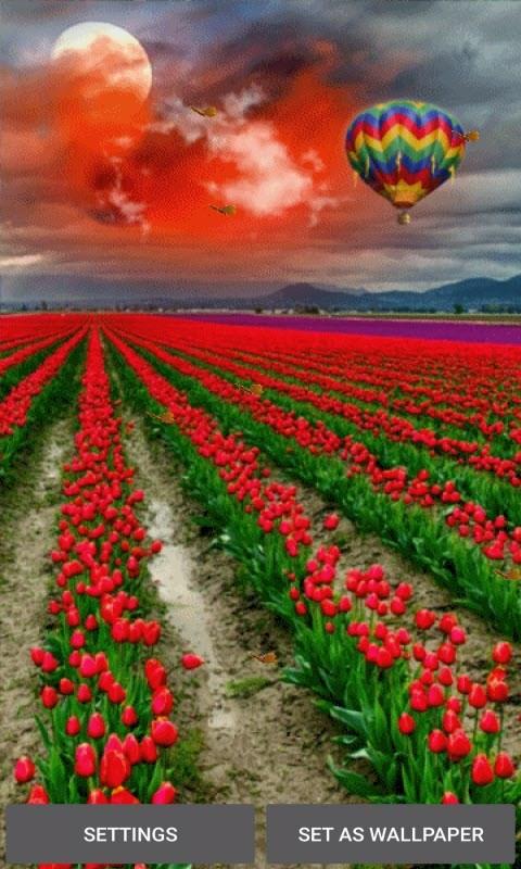 Tulip Flowers Live Wallpaper