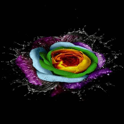 Watery Rose Beauty LWP