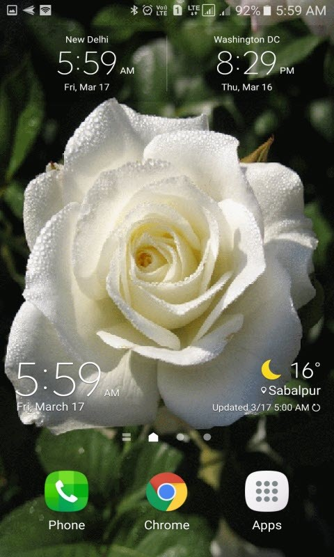 Dewy White Rose LWP