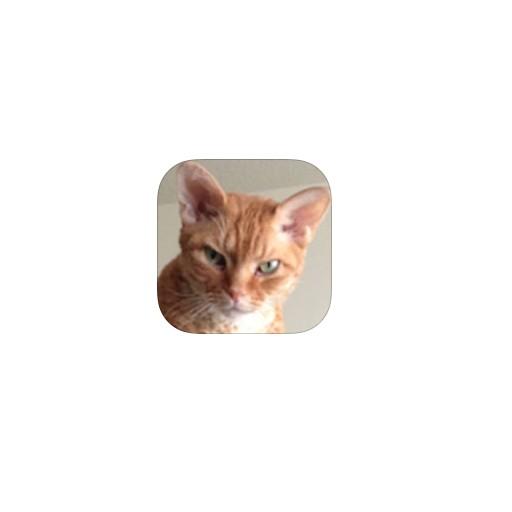 Feline Finder - Find & adopt the purrfect cat
