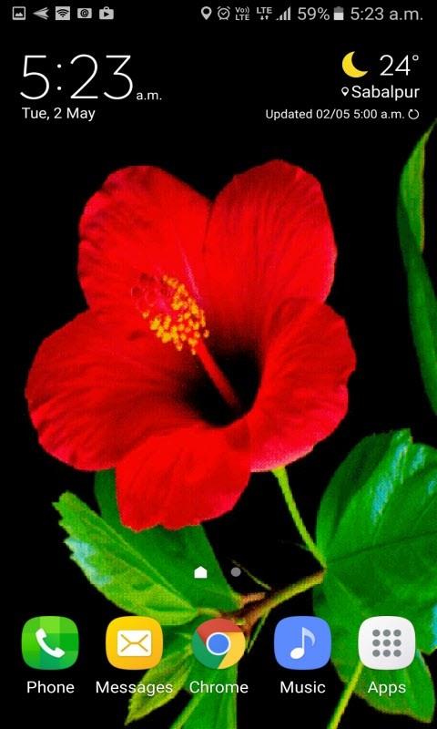 Red Flower Beauty LWP