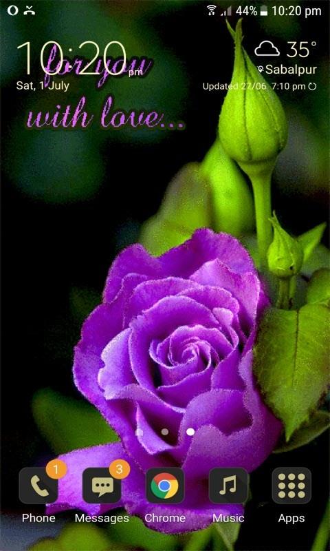 Purple Lovely Rose LWP