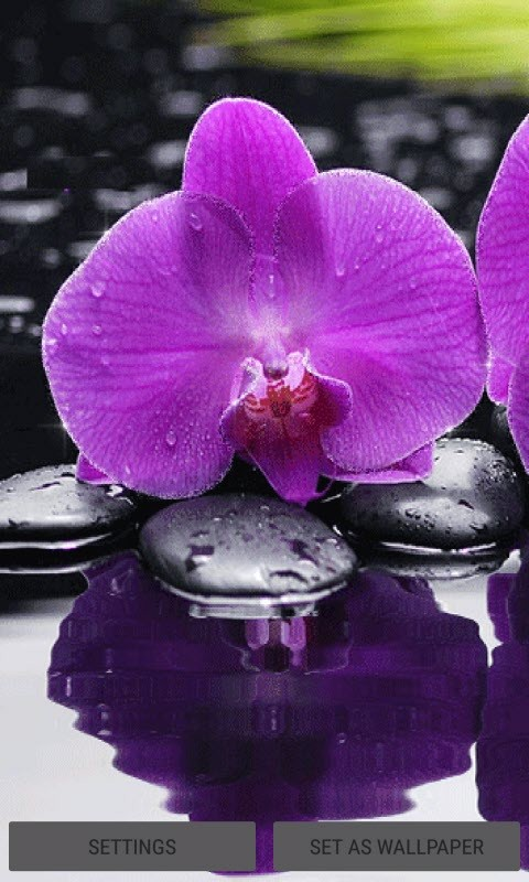 Purple Orchid Live Wallpaper