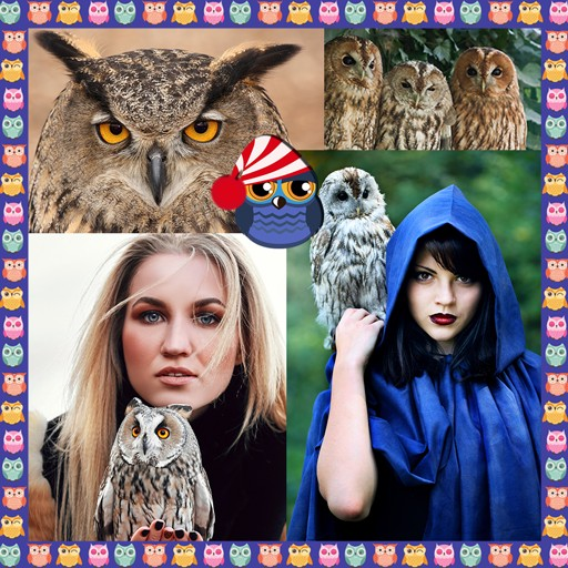Owls Photo Collage