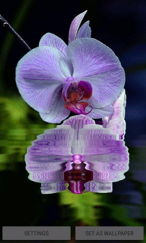 Purple Orchid Flower LWP