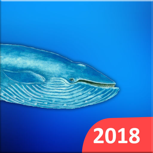 Blue Whales 2018