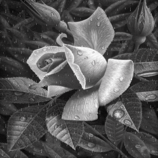 Black And White Rose LWP