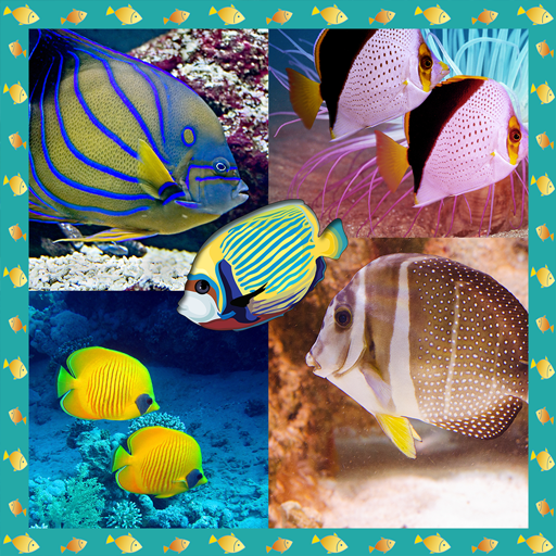 Fish Photo Collage Maker