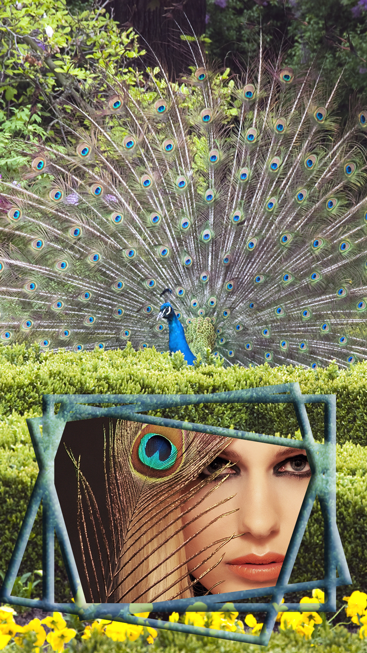 Peacock Photo Frames