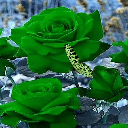 Green Roses Butterfly LWP