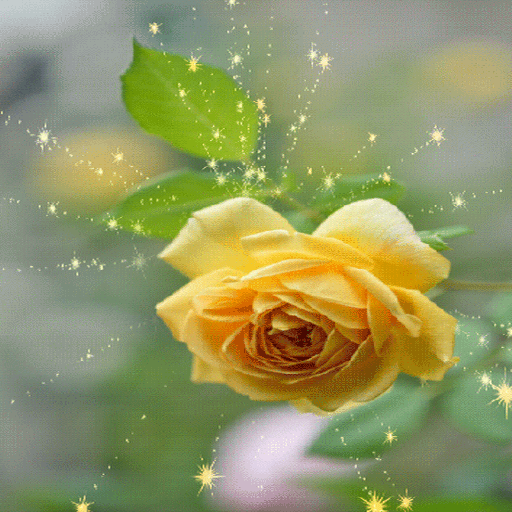 Magical Yellow Rose LWP