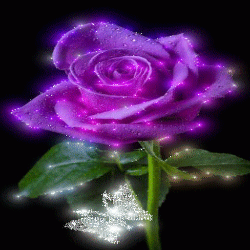Purple Shine Rose LWP