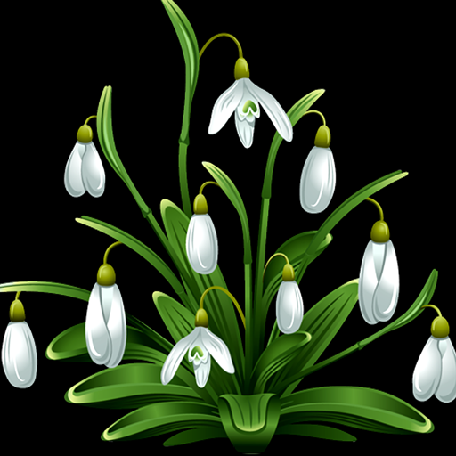 Snowdrops Photo Collage