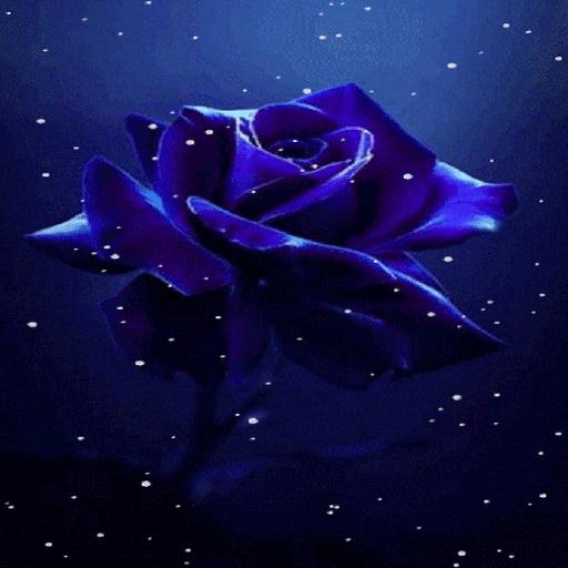 Snowy Blue Rose LWP
