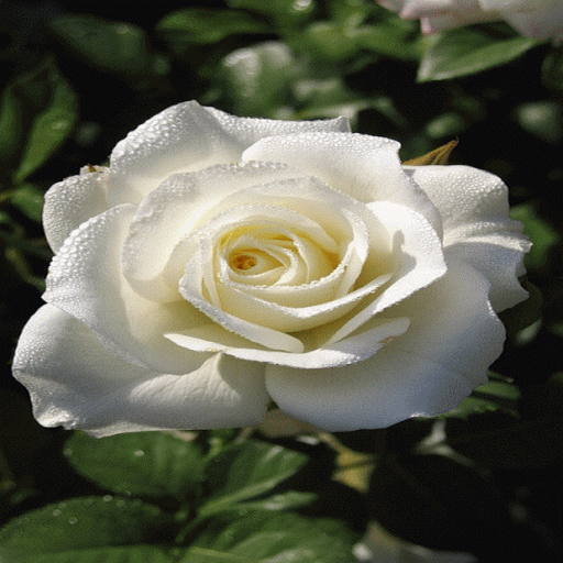 Dewy Rose Blooming LWP