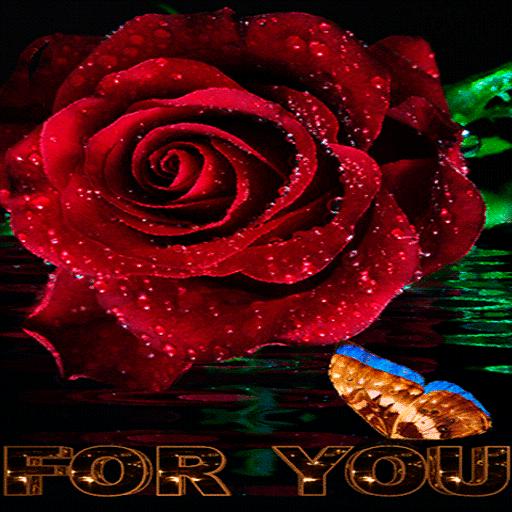 Dewy Rose Butterfly LWP