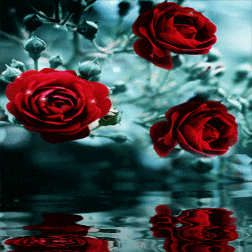 Red Roses Reflection LWP