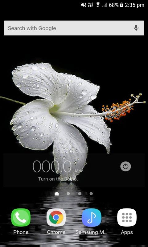 Dewy Hibiscus Live Wallpaper
