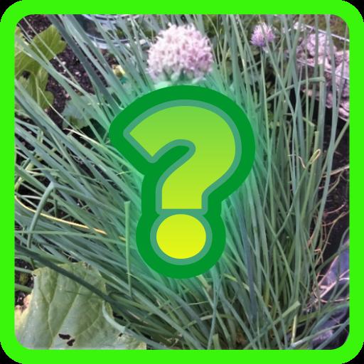 Essbare Pflanzen - Botanisch