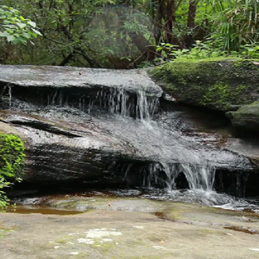 Forest Rock Water LWP