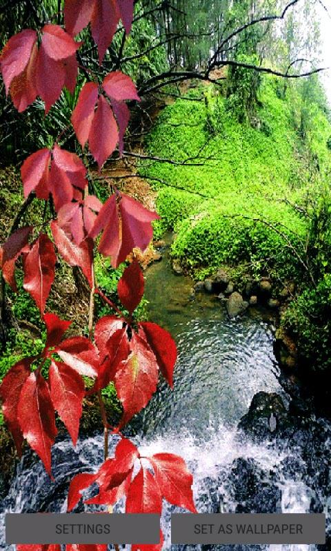 Nature Pond Live Wallpaper
