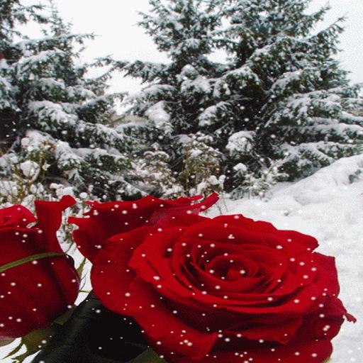 Winter Rose Live Wallpaper