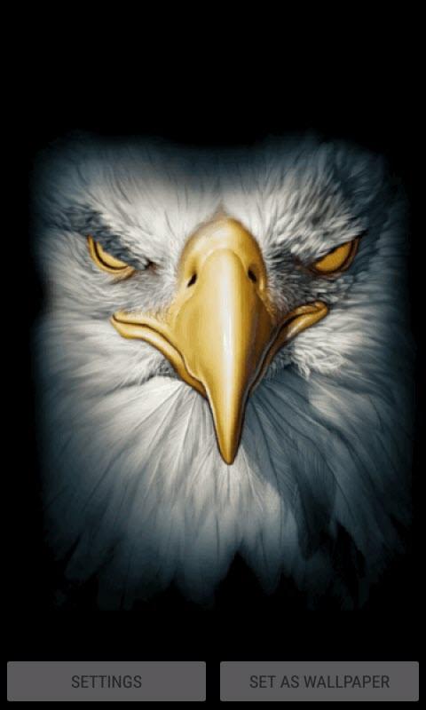 Eagle Face Live Wallpaper