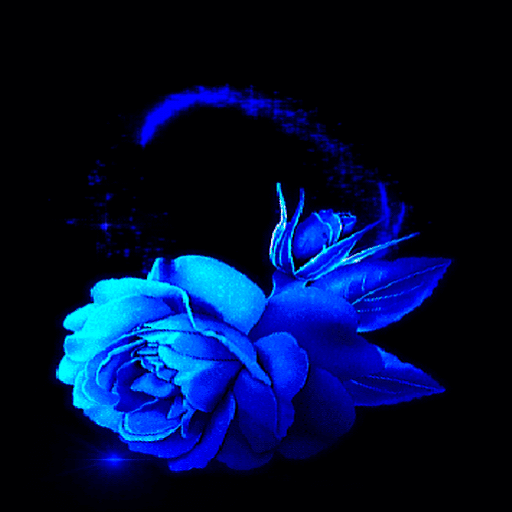 Lovely Blue Rose LWP