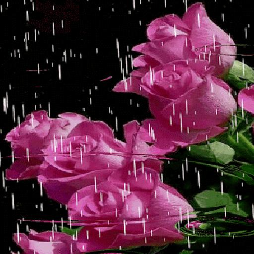 Lovely Rainy Roses LWP