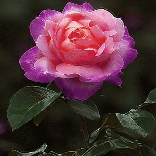 Pink Rose Beauty LWP